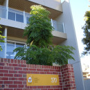 Ronald McDonald House Apartments Design by Hodgkison Adelaide Architects